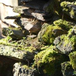 Grüne Galerie – MärzAufnahmen