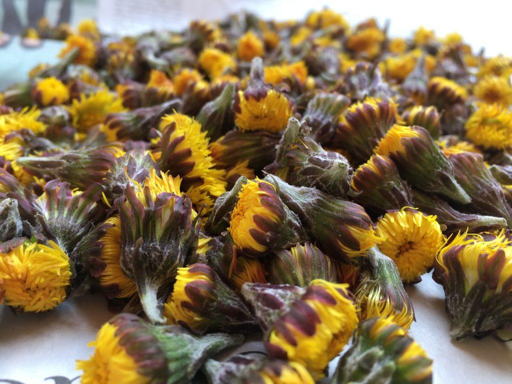 Blüten des Huflattich