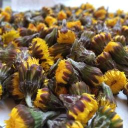 Huflattich: heilsame Blüten im März